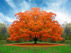 image-582177-autumn.png